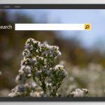 Bing अनुप्रेषण वायरस की तस्वीर